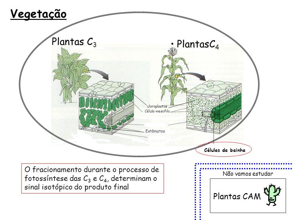 Vegetação PlantasC 4 Plantas C 3 Plantas CAM Não vamos estudar Célula mesofilo cloroplastos Estômatos Células da bainha O fracionamento durante o proc