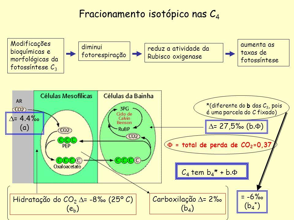 Modificações bioquímicas e morfológicas da fotossíntese C 3 reduz a atividade da Rubisco oxigenase aumenta as taxas de fotossíntese diminui fotorespir