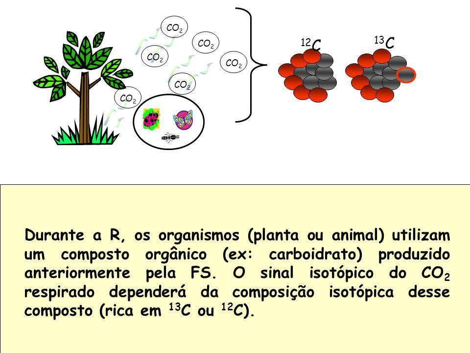 Durante a R, os organismos (planta ou animal) utilizam um composto orgânico (ex: carboidrato) produzido anteriormente pela FS. O sinal isotópico do CO