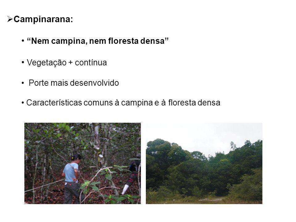 Campinarana: Nem campina, nem floresta densa Vegetação + contínua Porte mais desenvolvido Características comuns à campina e à floresta densa