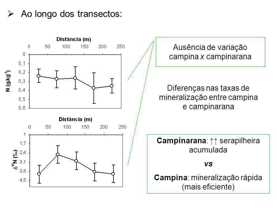 Ao longo dos transectos: Ausência de variação campina x campinarana Diferenças nas taxas de mineralização entre campina e campinarana Campinarana: ser