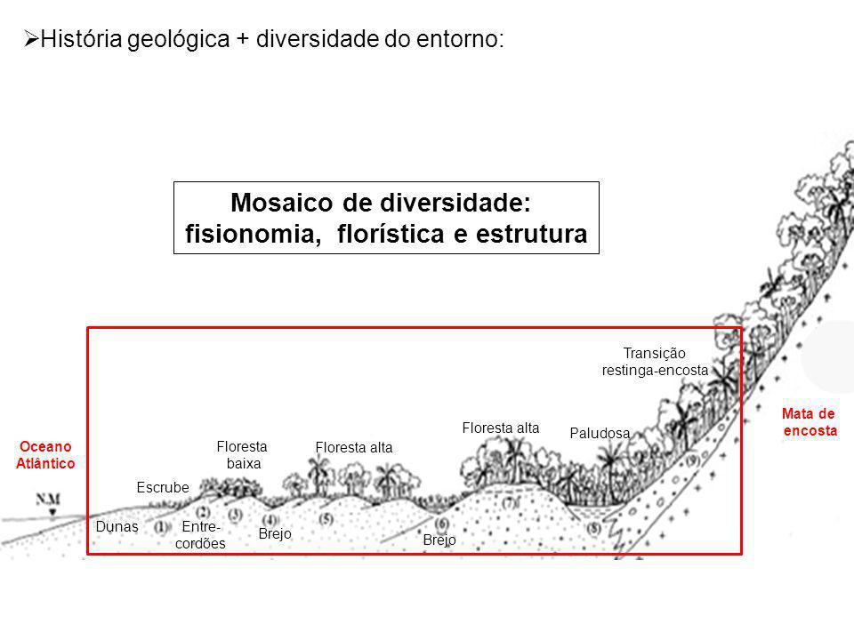 Paludosa Floresta alta Brejo Floresta baixa Entre- cordões Escrube Dunas Transição restinga-encosta Mata de encosta Oceano Atlântico Floresta alta Bre