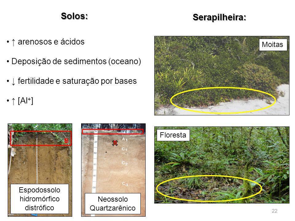Espodossolo hidromórfico distrófico Neossolo Quartzarênico Solos: Serapilheira: Moitas Floresta arenosos e ácidos Deposição de sedimentos (oceano) fer