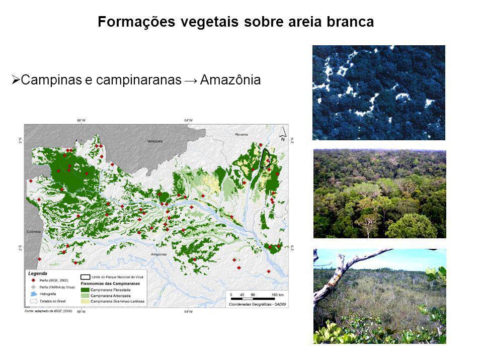 Formações vegetais sobre areia branca Campinas e campinaranas Amazônia Apoio: