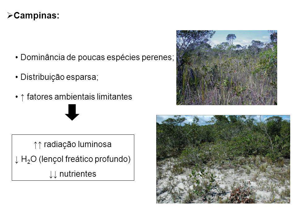 Campinas: Dominância de poucas espécies perenes; Distribuição esparsa; fatores ambientais limitantes radiação luminosa H 2 O (lençol freático profundo