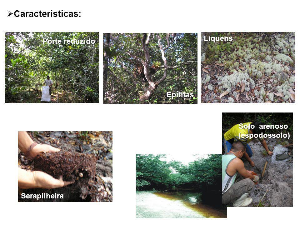 Liquens Serapilheira Porte reduzido Porte reduzido Epífitas Solo arenoso (espodossolo) Características: