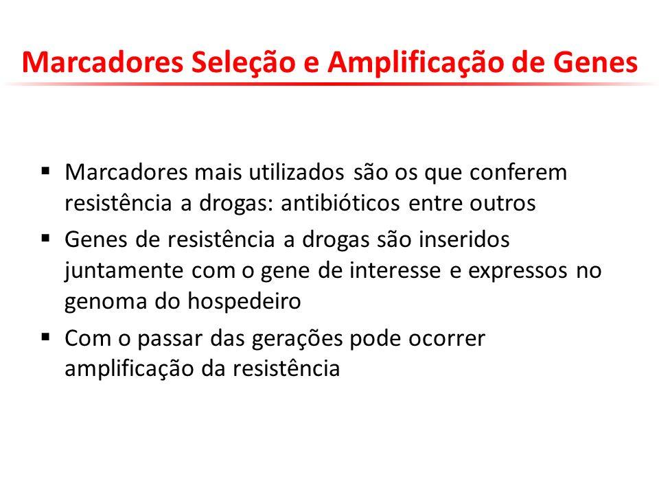 Marcadores Seleção e Amplificação de Genes Marcadores mais utilizados são os que conferem resistência a drogas: antibióticos entre outros Genes de res