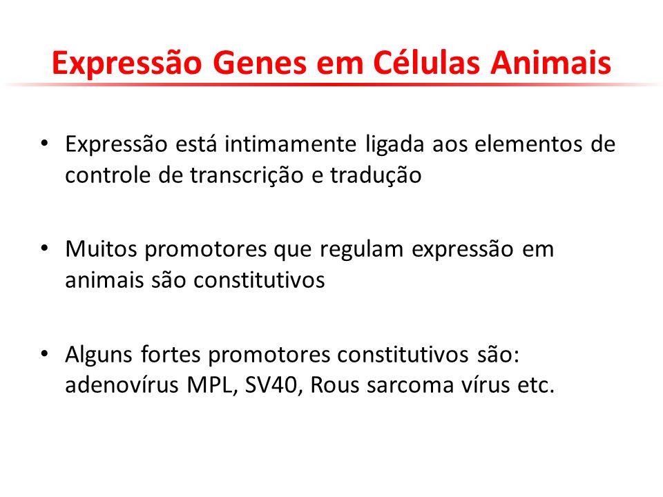 Expressão Genes em Células Animais Expressão está intimamente ligada aos elementos de controle de transcrição e tradução Muitos promotores que regulam