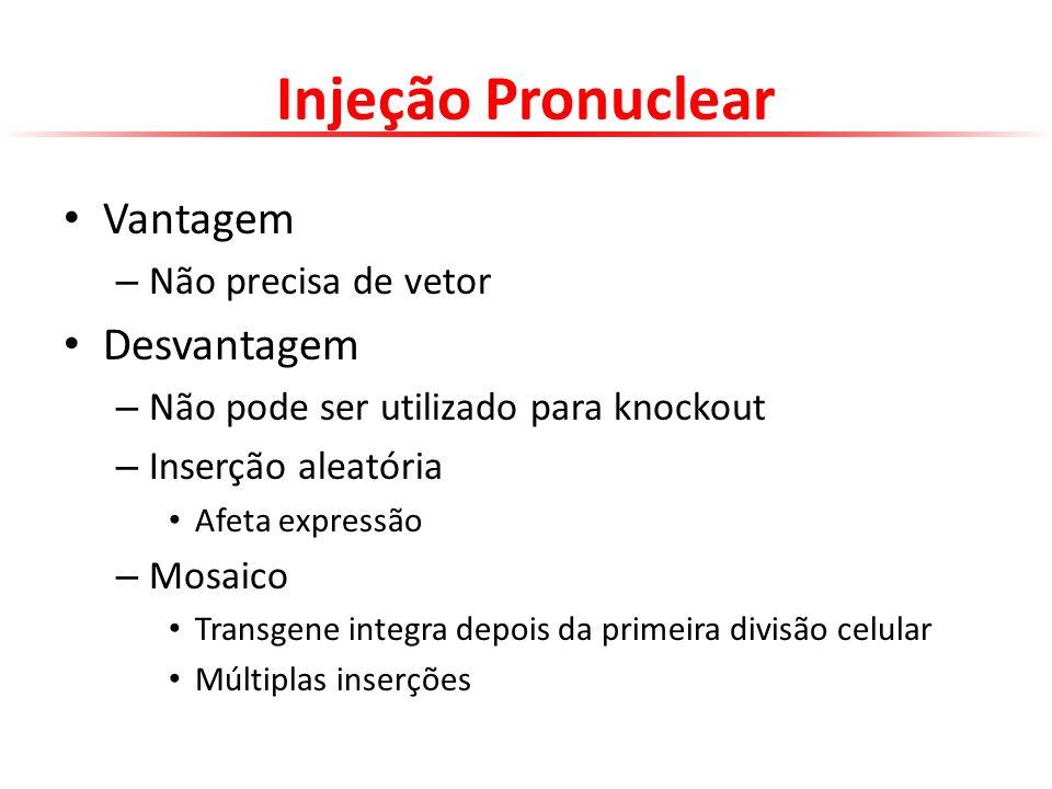 Injeção Pronuclear Vantagem – Não precisa de vetor Desvantagem – Não pode ser utilizado para knockout – Inserção aleatória Afeta expressão – Mosaico T