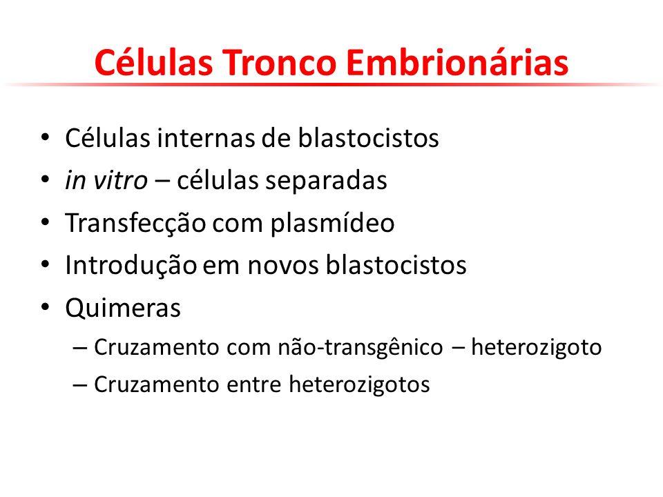 Células Tronco Embrionárias Células internas de blastocistos in vitro – células separadas Transfecção com plasmídeo Introdução em novos blastocistos Q