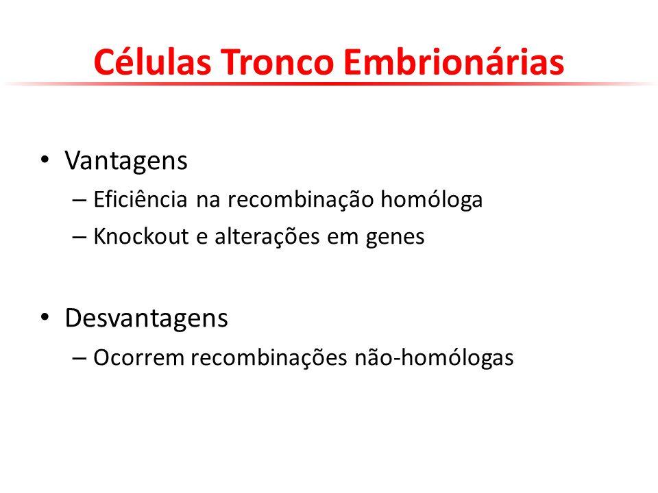 Células Tronco Embrionárias Vantagens – Eficiência na recombinação homóloga – Knockout e alterações em genes Desvantagens – Ocorrem recombinações não-