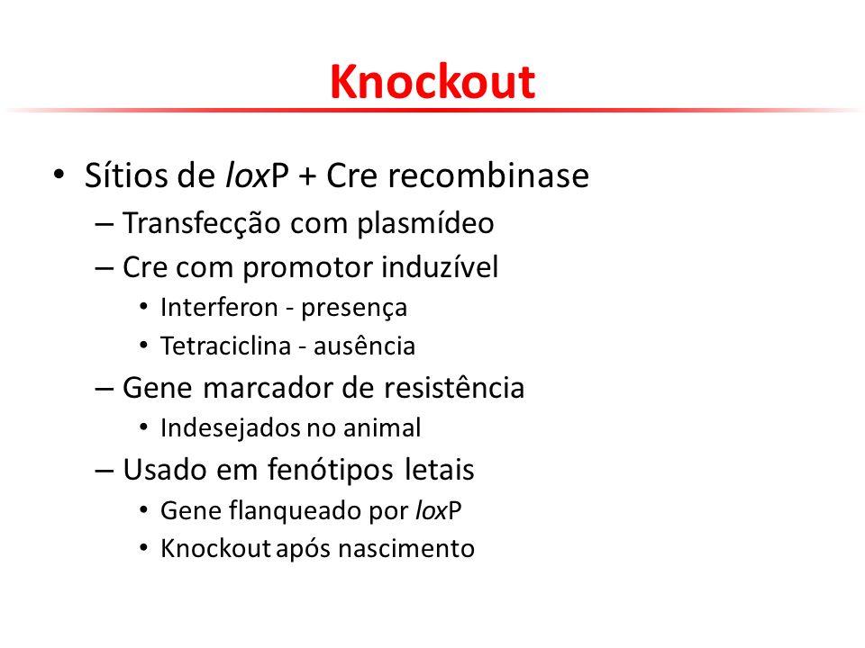 Knockout Sítios de loxP + Cre recombinase – Transfecção com plasmídeo – Cre com promotor induzível Interferon - presença Tetraciclina - ausência – Gen