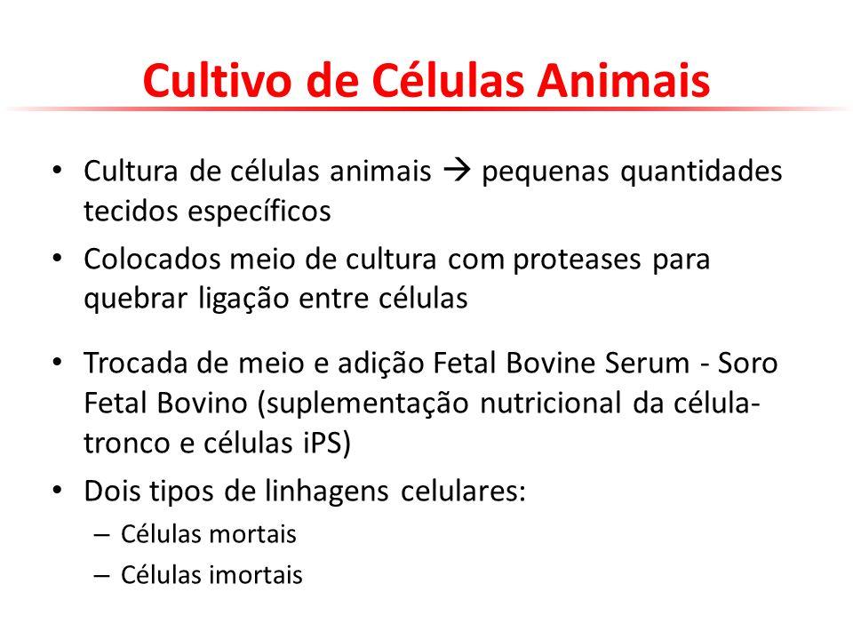 Cultivo de Células Animais Cultura de células animais pequenas quantidades tecidos específicos Colocados meio de cultura com proteases para quebrar li