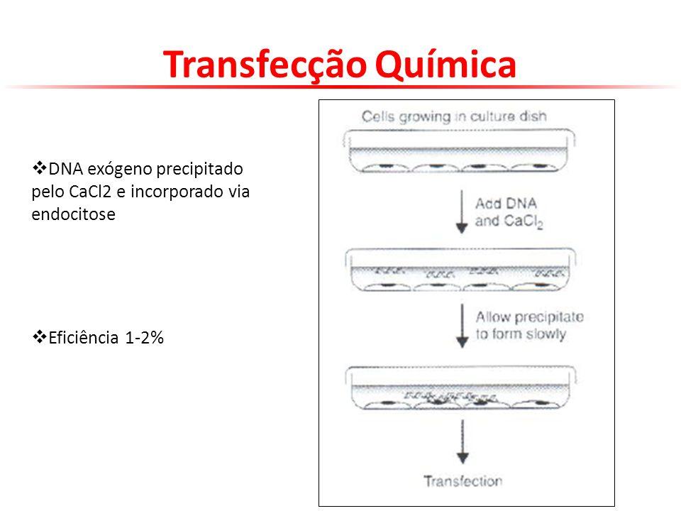 DNA exógeno precipitado pelo CaCl2 e incorporado via endocitose Eficiência 1-2% Transfecção Química