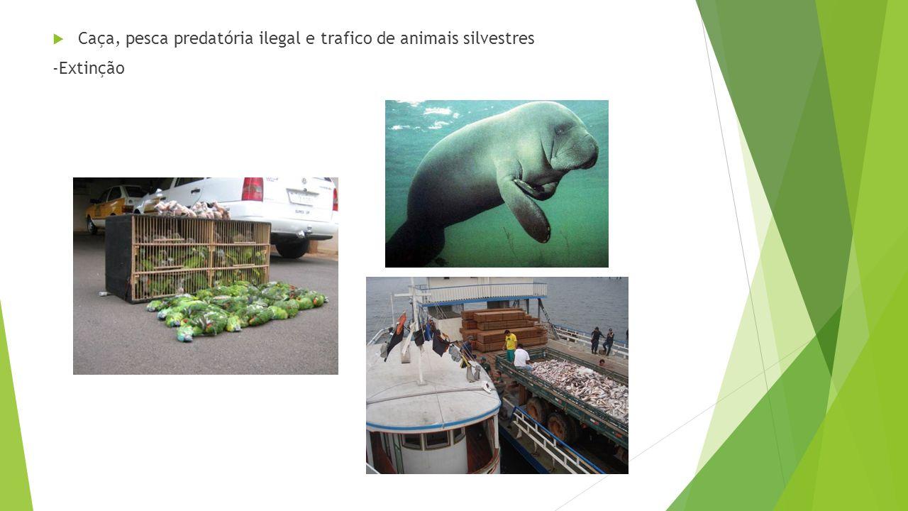 Caça, pesca predatória ilegal e trafico de animais silvestres -Extinção