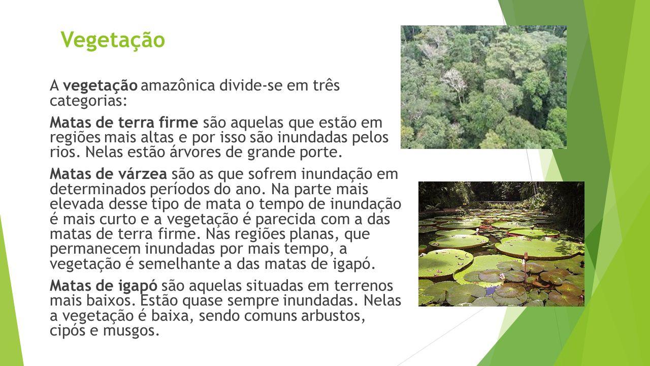 Vegetação A vegetação amazônica divide-se em três categorias: Matas de terra firme são aquelas que estão em regiões mais altas e por isso são inundada