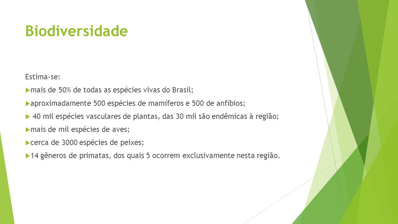 Biodiversidade Estima-se: mais de 50% de todas as espécies vivas do Brasil; aproximadamente 500 espécies de mamíferos e 500 de anfíbios; 40 mil espéci