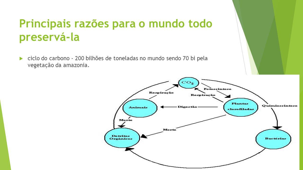 Principais razões para o mundo todo preservá-la ciclo do carbono - 200 bilhões de toneladas no mundo sendo 70 bi pela vegetação da amazonia.