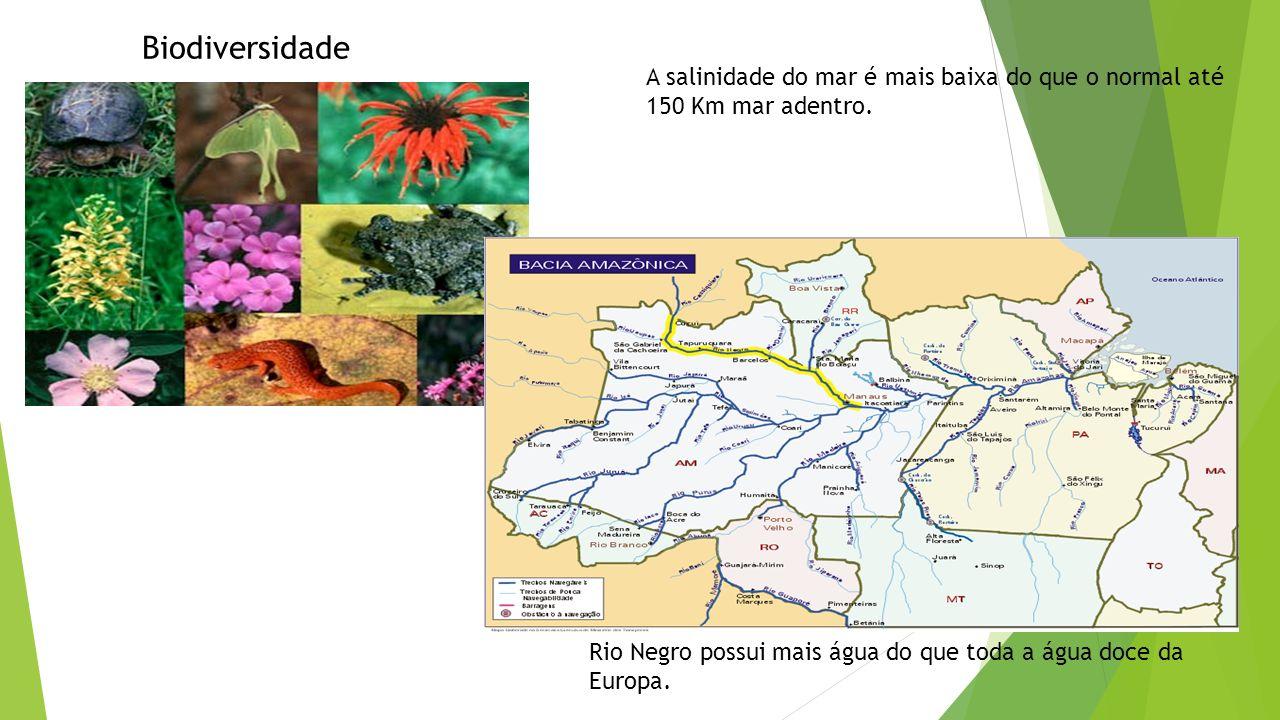Biodiversidade Rio Negro possui mais água do que toda a água doce da Europa. A salinidade do mar é mais baixa do que o normal até 150 Km mar adentro.