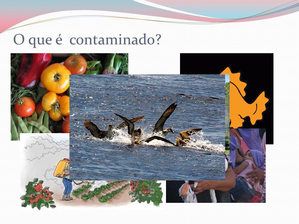 O que é contaminado?
