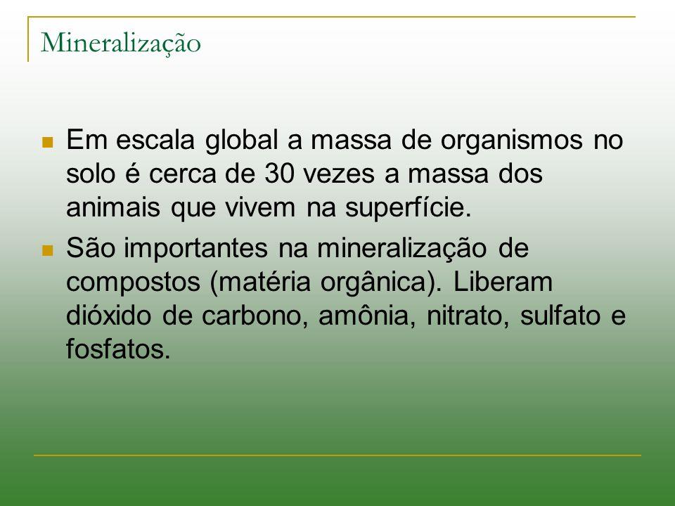 Mineralização Em escala global a massa de organismos no solo é cerca de 30 vezes a massa dos animais que vivem na superfície. São importantes na miner