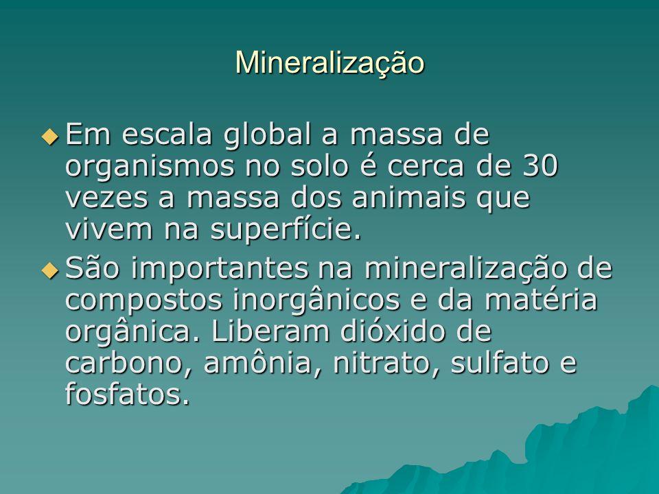Mineralização Em escala global a massa de organismos no solo é cerca de 30 vezes a massa dos animais que vivem na superfície. Em escala global a massa