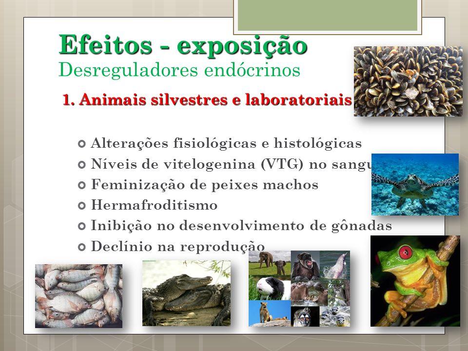 1. Animais silvestres e laboratoriais Alterações fisiológicas e histológicas Níveis de vitelogenina (VTG) no sangue Feminização de peixes machos Herma