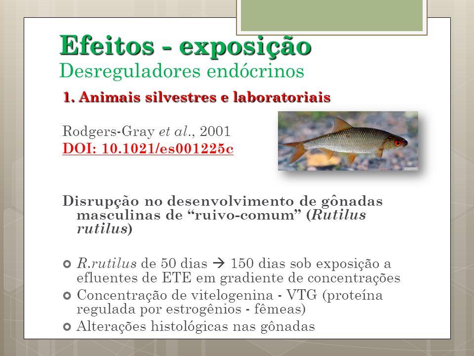 1. Animais silvestres e laboratoriais Rodgers-Gray et al., 2001 DOI: 10.1021/es001225c Disrupção no desenvolvimento de gônadas masculinas de ruivo-com
