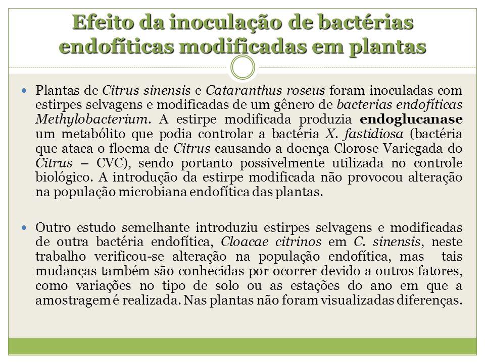 Efeito da inoculação de bactérias endofíticas modificadas em plantas Plantas de Citrus sinensis e Cataranthus roseus foram inoculadas com estirpes sel