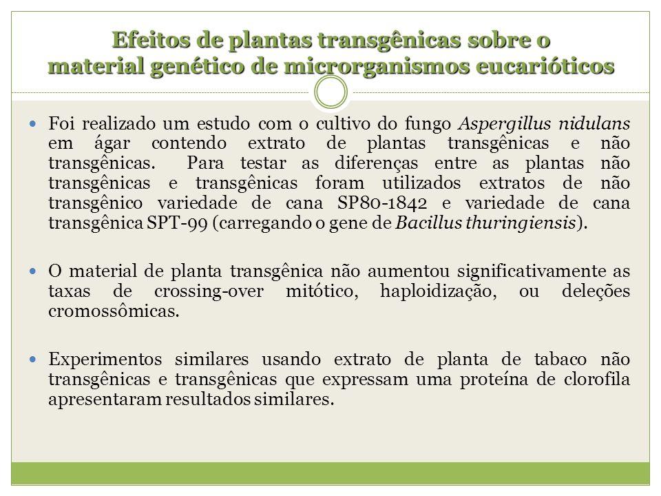 Efeitos de plantas transgênicas sobre o material genético de microrganismos eucarióticos Foi realizado um estudo com o cultivo do fungo Aspergillus ni