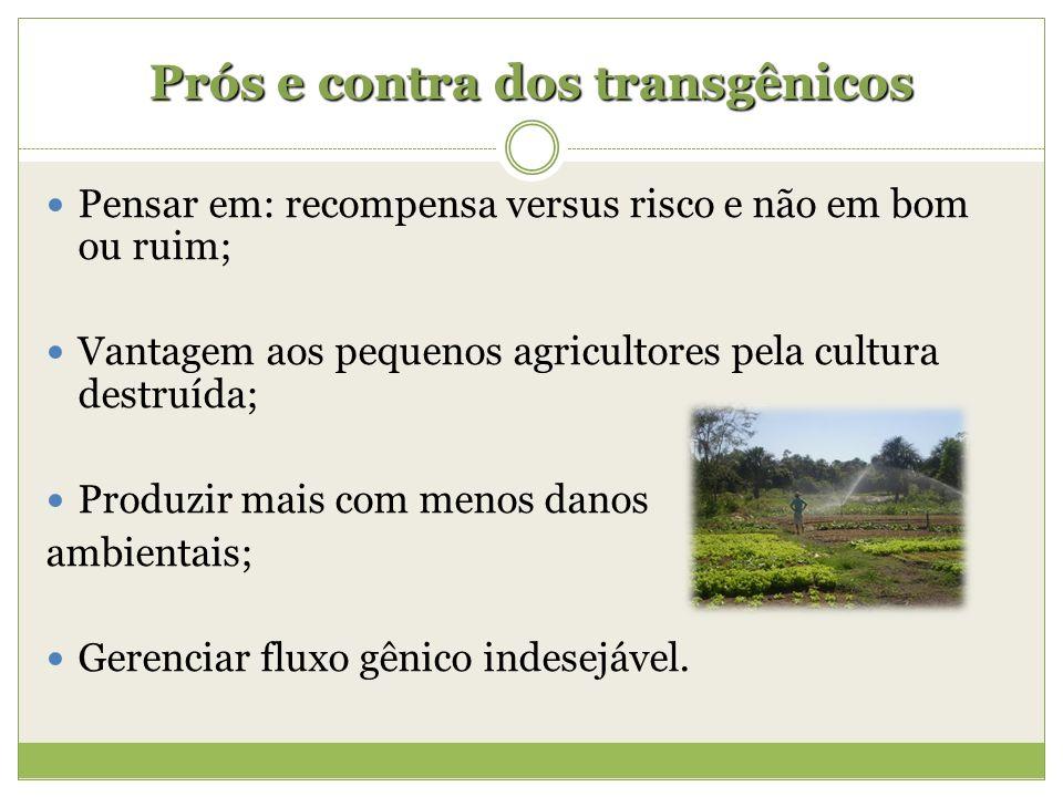 Prós e contra dos transgênicos Pensar em: recompensa versus risco e não em bom ou ruim; Vantagem aos pequenos agricultores pela cultura destruída; Pro