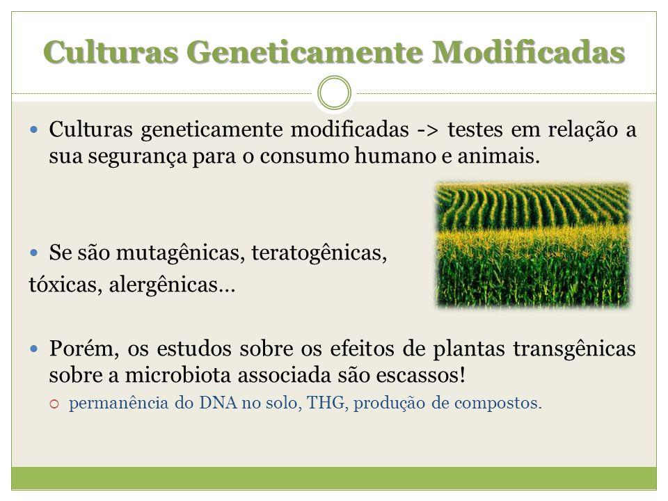 Culturas Geneticamente Modificadas Culturas geneticamente modificadas -> testes em relação a sua segurança para o consumo humano e animais. Se são mut
