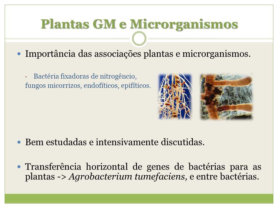 Plantas GM e Microrganismos Importância das associações plantas e microrganismos. Bactéria fixadoras de nitrogêncio, fungos micorrizos, endofíticos, e