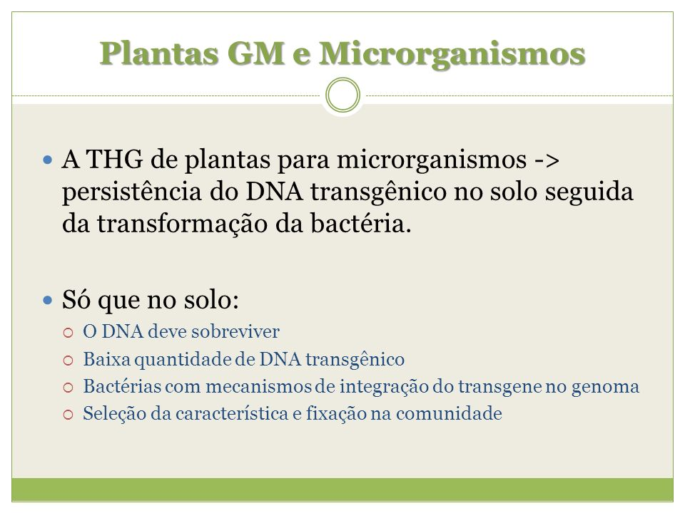 Plantas GM e Microrganismos A THG de plantas para microrganismos -> persistência do DNA transgênico no solo seguida da transformação da bactéria. Só q