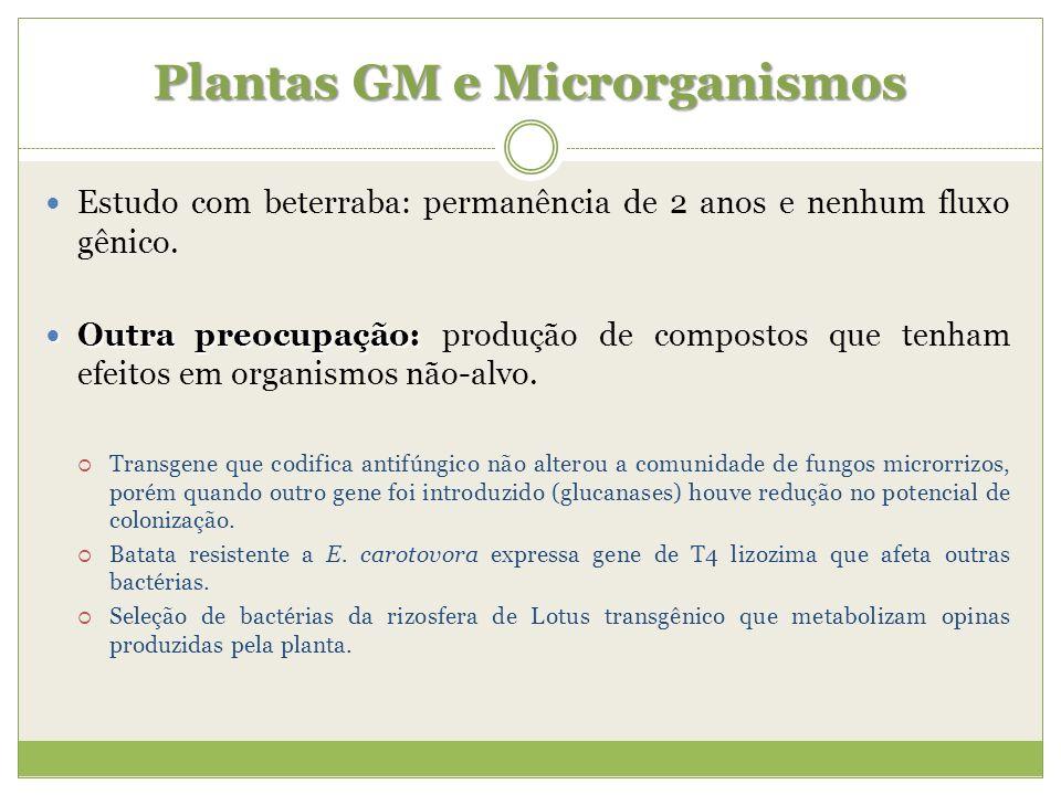 Plantas GM e Microrganismos Estudo com beterraba: permanência de 2 anos e nenhum fluxo gênico. Outra preocupação: Outra preocupação: produção de compo