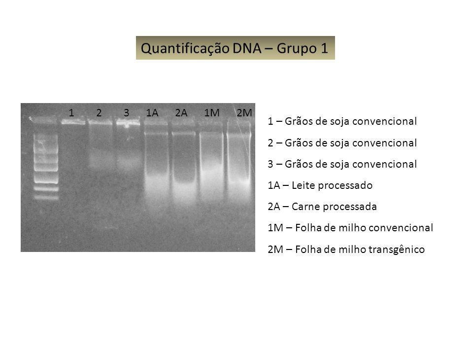 1 2 3 1A 2A 1M 2M Quantificação DNA – Grupo 1 1 – Grãos de soja convencional 2 – Grãos de soja convencional 3 – Grãos de soja convencional 1A – Leite