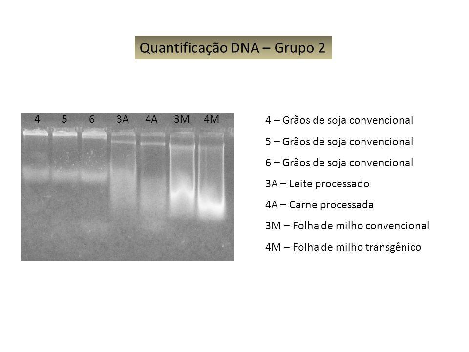 4 5 6 3A 4A 3M 4M Quantificação DNA – Grupo 2 4 – Grãos de soja convencional 5 – Grãos de soja convencional 6 – Grãos de soja convencional 3A – Leite