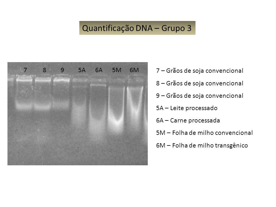 7 8 9 5A 6A 5M 6M Quantificação DNA – Grupo 3 7 – Grãos de soja convencional 8 – Grãos de soja convencional 9 – Grãos de soja convencional 5A – Leite