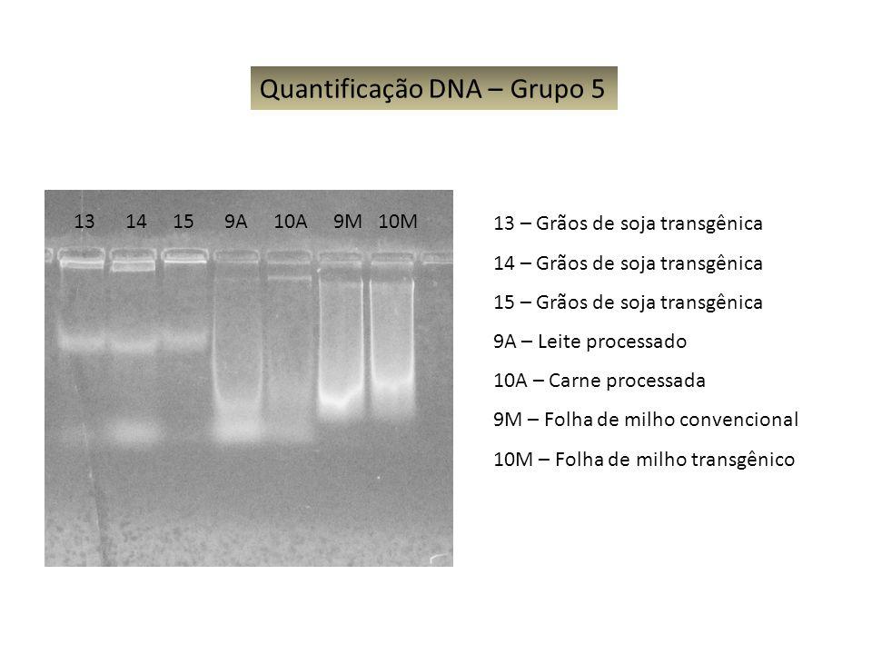 13 14 15 9A 10A 9M 10M Quantificação DNA – Grupo 5 13 – Grãos de soja transgênica 14 – Grãos de soja transgênica 15 – Grãos de soja transgênica 9A – L