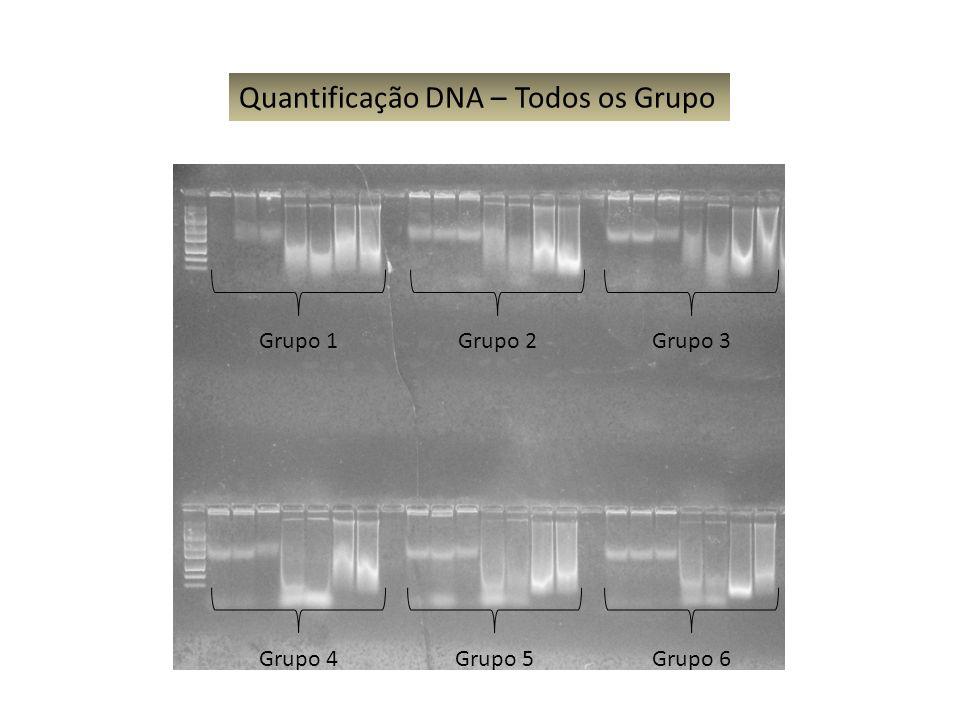 Grupo 1Grupo 2Grupo 3 Grupo 4Grupo 5Grupo 6 Quantificação DNA – Todos os Grupo