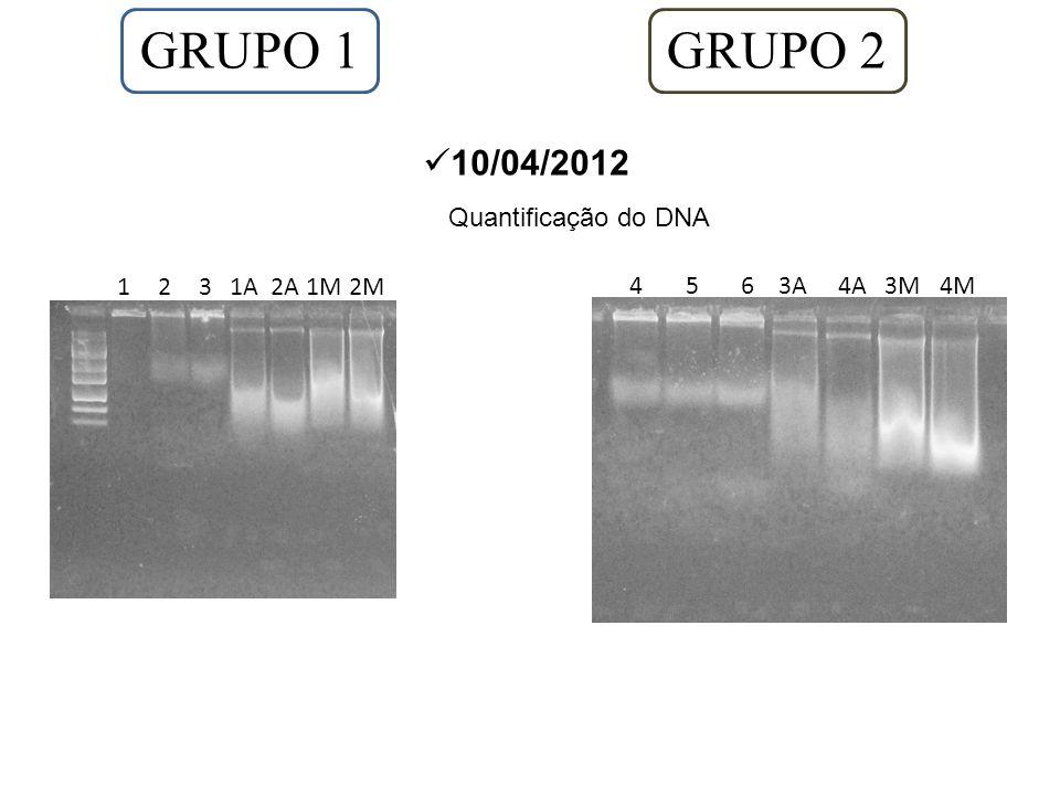 GRUPO 1 10/04/2012 Quantificação do DNA 1231A2A1M2M GRUPO 2 4 5 6 3A 4A 3M 4M