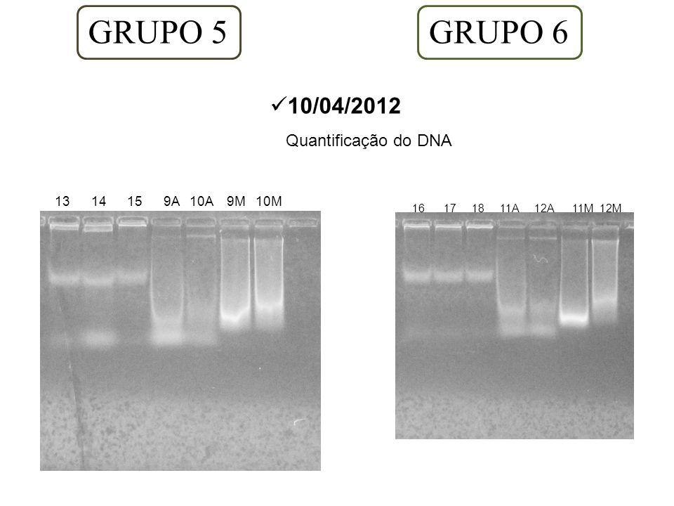 GRUPO 5 10/04/2012 Quantificação do DNA 13 14 15 9A 10A 9M 10M GRUPO 6 16 17 18 11A 12A 11M 12M