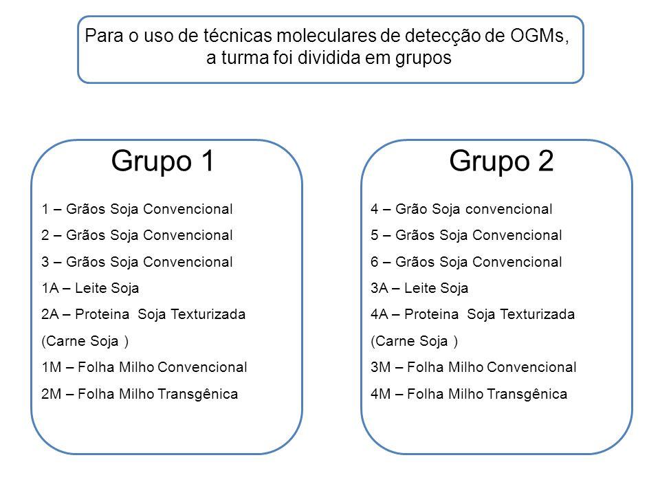 Grupo 3Grupo 4 Para o uso de técnicas moleculares de detecção de OGMs, a turma foi dividida em grupos 7 – Grãos Soja Convencional 8 – Grãos Soja Convencional 9 – Grãos Soja Convencional 5A – Leite Soja 6A – Proteina Soja Texturizada (Carne Soja ) 5M – Folha Milho Convencional 6M – Folha Milho Transgênica 10 – Grãos Soja Transgênica 11 – Grãos Soja Transgênica 12 – Grãos Soja Transgênica 7A – Leite Soja 8A – Proteina Soja Texturizada (Carne Soja ) 7M – Folha Milho Convencional 8M – Folha Milho Transgênica