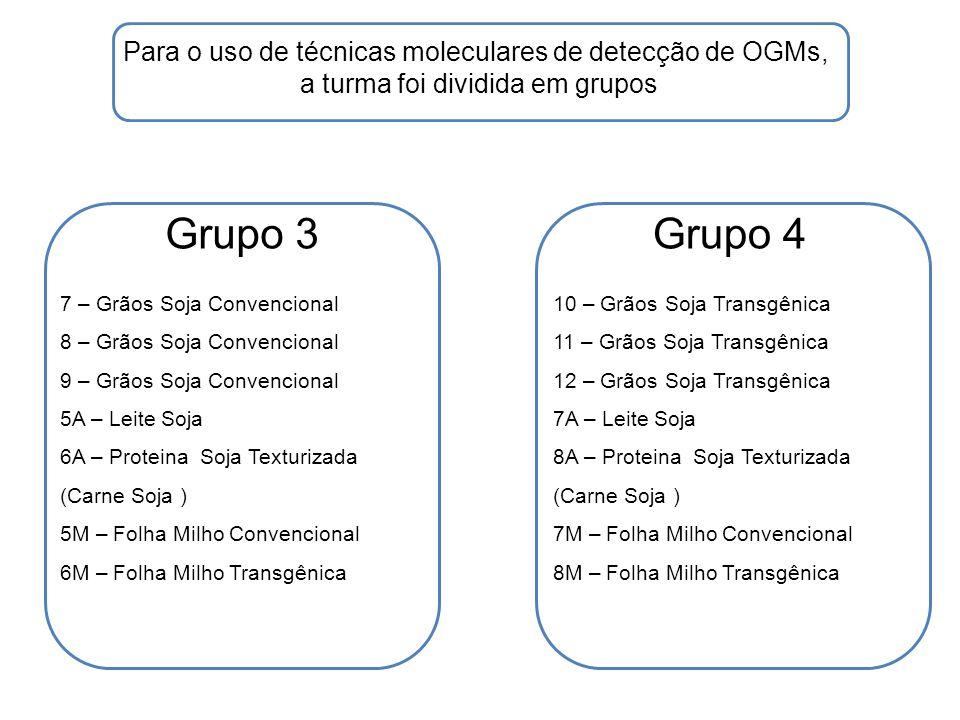 Grupo 5Grupo 6 Para o uso de técnicas moleculares de detecção de OGMs, a turma foi dividida em grupos 13 – Grãos Soja Transgênica 14 – Grãos Soja Transgênica 15 – Grãos Soja Transgênica 9A – Leite Soja 10A – Proteina Soja Texturizada (Carne Soja ) 9M – Folha Milho Convencional 10M – Folha Milho Transgênica 16 – Grãos Soja Transgênica 17 – Grãos Soja Transgênica 18 – Grãos Soja Transgênica 11A – Leite Soja 12A – Proteina Soja Texturizada (Carne Soja ) 11M – Folha Milho Convencional 12M – Folha Milho Transgênica