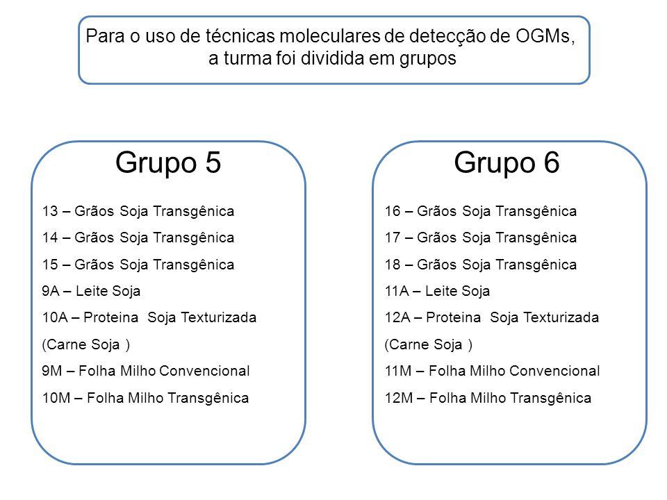 Grupo 5Grupo 6 Para o uso de técnicas moleculares de detecção de OGMs, a turma foi dividida em grupos 13 – Grãos Soja Transgênica 14 – Grãos Soja Tran