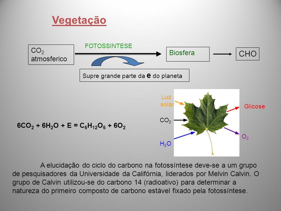 A elucidação do ciclo do carbono na fotossíntese deve-se a um grupo de pesquisadores da Universidade da Califórnia, liderados por Melvin Calvin. O gru
