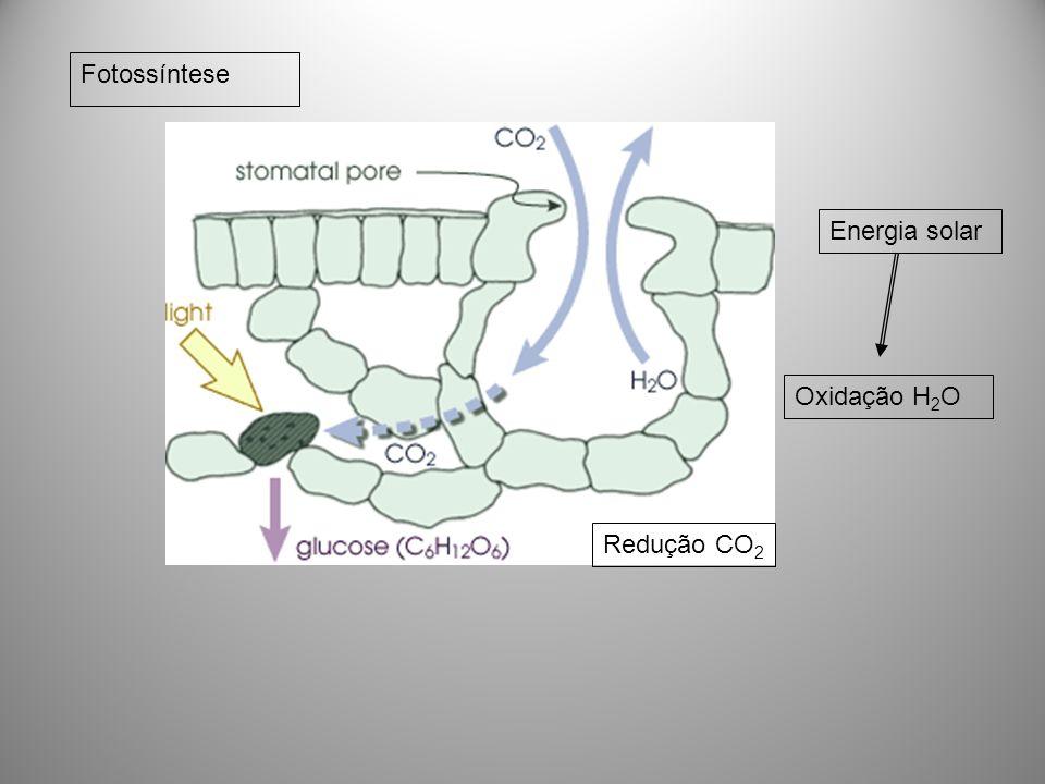 Fotossíntese Oxidação H 2 O Redução CO 2 Energia solar