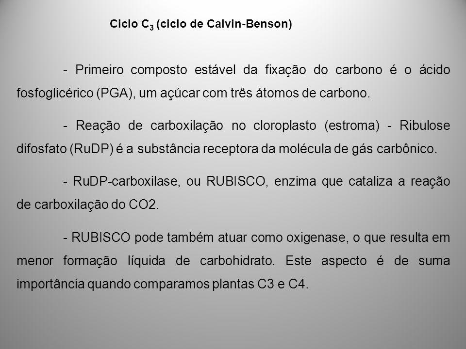 Ciclo C 3 (ciclo de Calvin-Benson) - Primeiro composto estável da fixação do carbono é o ácido fosfoglicérico (PGA), um açúcar com três átomos de carb
