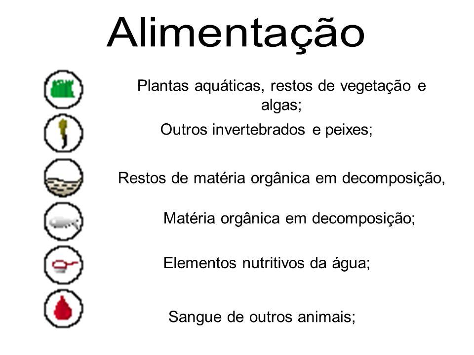 Sangue de outros animais; Plantas aquáticas, restos de vegetação e algas; Outros invertebrados e peixes; Restos de matéria orgânica em decomposição, M