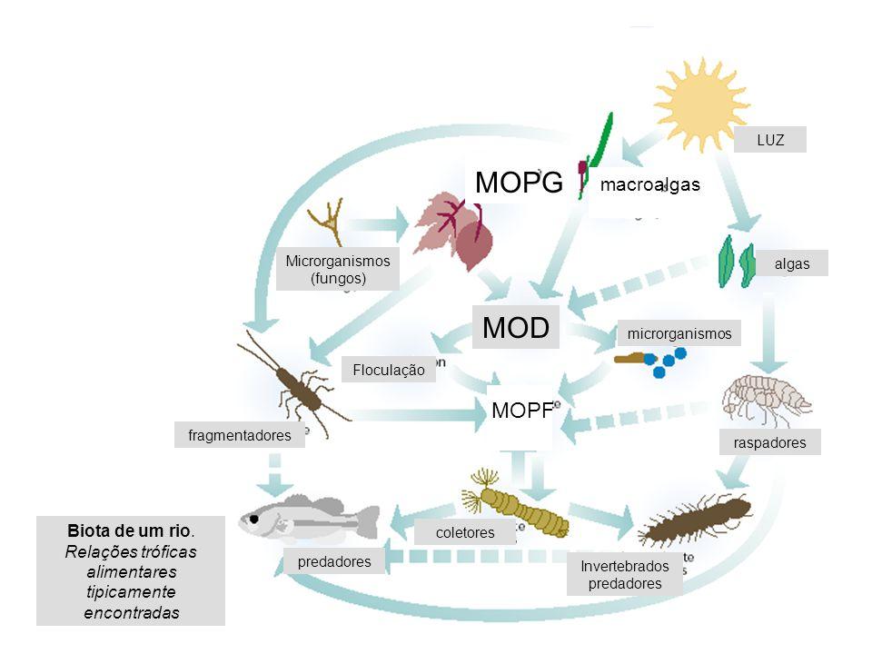 fragmentadores Invertebrados predadores fragmentadores Floculação Microrganismos (fungos) LUZ algas raspadores coletores predadores microrganismos MOD